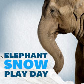 Elephant Snow Day