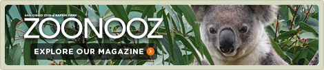 ZOONOOZ: Explore our Magazine