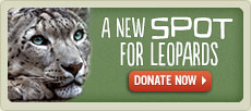 A New Spot For Leopards. They need a new home. Donate Now.
