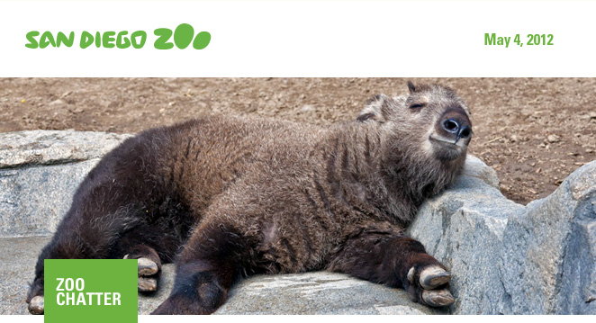 San Diego Zoo: Zoo Chatter: May 4, 2012