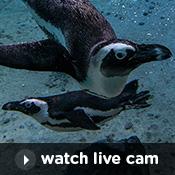 Little penguins child care exmouth webcam