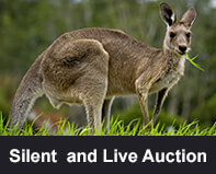 Silent and Live Auction