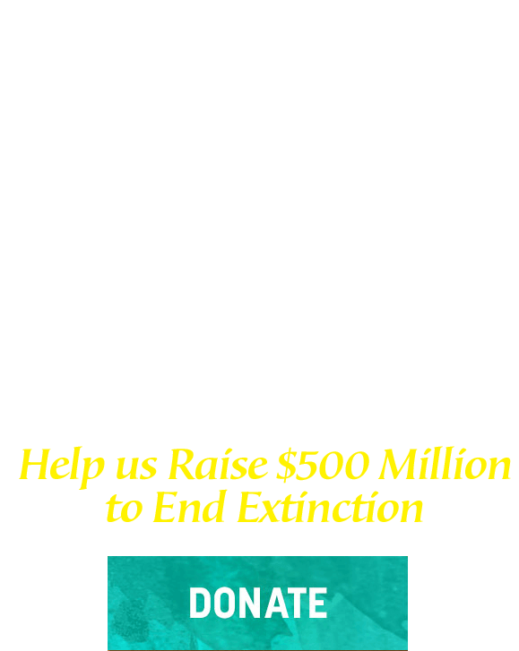San Diego Zoo Kids. Help Healing Begin. Donate Today
